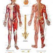 Zenuwsysteem