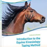 Kinesiologie taping bij paarden