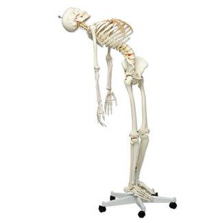 Flexibel skelet